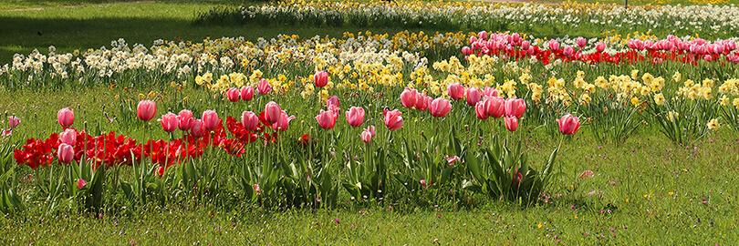 Frühjahrsblütenflor