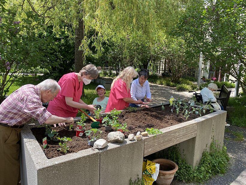 Gemeinsam mit unseren Bewohnern bepflanzten unsere Betreuungs- und Aktivierungsmitarbeiter die Hochbeete in unserem Naschgarten mit Erdbeerpflanzen, Erbsen, Radieschen, Kohlrabi.